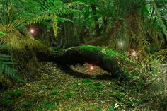Where The Fairies Live