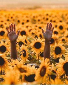 Walk in fields of sunflowers