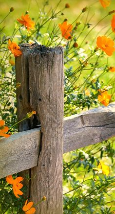fencepost and wildflowers / flores silvestres Country Life, Country Living, Country Charm, Wild Flowers, Beautiful Flowers, Flowers Nature, Wild Poppies, Happy Flowers, Beautiful Gorgeous