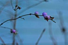 delicate, beautiful flower!