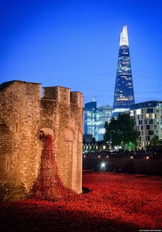 Blood Swept Lands And Seas Of Red by ceramic artist Paul Cummins. red ceramic poppies were placed in the moat of the Tower of London -- one for each British and Colonial soldier who lost their life in the First World War. Harrods, Royal British Legion, The Shard, Remembrance Day, Tower Of London, London City, London Calling, British Isles, Cummins