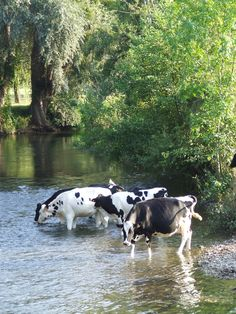 31 ideas dairy cows art the farm for 2019 My French Country Home, Country Farm, Country Life, Country Living, Country Roads, Farm Animals, Animals And Pets, Cute Animals, Esprit Country
