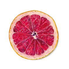 grapefruit illustration - Google Search