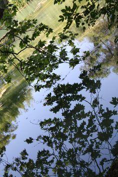 Les bords du Lez  Montpellier  photos perso de ballade/ made by tricochette