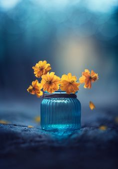 """Little treasures - Deep in your wounds are seeds, waiting to grow beautiful flowers.. <br><a href=""""http://www.facebook.com/AshrafulArefinPhotography"""">FACEBOOK</a> / <a href=""""http:www.instagram.com/monsieur_arefin"""">INSTAGRAM</a> / <a href=""""http://twitter.com/ArefinArtist"""">TWITTER</a> / <a href=""""http://www.youtube.com/channel/UCqa9X8eSEnFYjl4gCfrG1TQ"""">YOUTUBE</a>"""