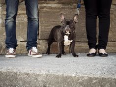 #irenecazonfotografia #fotografiaNatural #fotografiaConAlma #Asturias #boda #bodasnet #bodasasturias #bodasgijon #pareja#preboda French Bulldog, Dogs, Animals, Couples, Fotografia, Animales, Animaux, French Bulldog Shedding, Pet Dogs