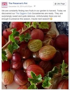 Gooseberries, posted by The Preserver's Pot