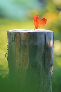 Y después de un tiempo uno aprende que, si es demasiado, hasta el calor del Sol puede quemar. Así que uno planta su propio jardín y decora su propia alma, en lugar de esperar a que alguien le traiga flores.