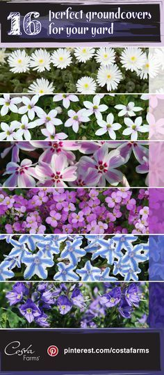 Weed-smothering groundcovers are ideal for troublesome spots in your yard where grass won't grow (or you don't want to mow). See some of the Costa Farms' gardening experts' top picks for easy-care, colorful groundcovers.