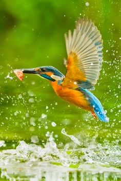 Kingfisher by Sue Hsu on 500px #BirdsofPrey #BirdofPrey #Bird of Prey