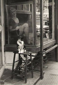 Victor Macarol - Cat & Marylin Thompson Street NYC  1988