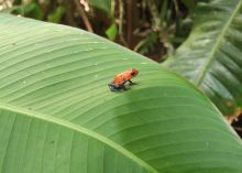 Solentiname Islands Excursions - Nicaragua | Audley Travel