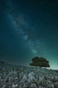 """Foto """"Eternal Tree"""" by panagiotis laoudikos #500px"""