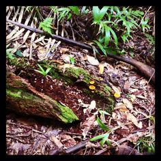 What i want to create in my garden and there we saw it today in Tamborine National Park. Beautiful Stel.