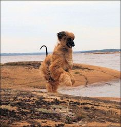 Goofy Dog, Hound Breeds, The Perfect Dog, Afghan Hound, Dogs Of The World, Afghans, Best Dogs, Royalty, Mood