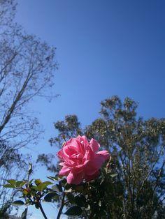 "bella flor"""