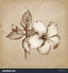 oleander pencil sketch - Google Search