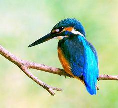 самые маленькие красивые птички: 18 тыс изображений найдено в Яндекс.Картинках