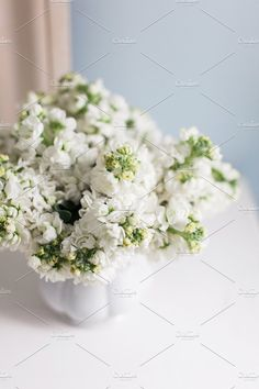 Beautiful White Hyacinths Photos A lovely bouquet of white hyacinths. by Light & Grace White Hyacinth, Website Images, Business Illustration, Business Card Logo, Nature Photos, Bouquet, Stock Photos, Creative, Floral