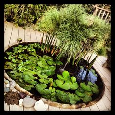 Small Patio Pond Ideas