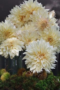 my french country flowers - dahlias and chestnuts 1