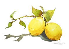 Watercolor Painting Lemon Painting Watercolor por blackteacafe