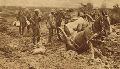 (Courtesy of The Great War Primary Documents Archive www.gwpda.org) Soldados tratan de sacar aun caballo hundido en el fango en Flandes. (War of the Nations, New York Times Co., New York, 1919)
