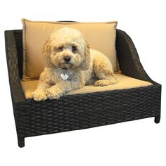 OhMyGoodness! Rigsby Neeeeds this!  Emerson Outdoor Wicker Pet Bed