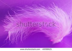 Pink feather on a violet background
