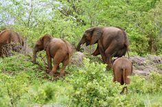 Chobe National Park: where elephants rule the world - Mokum Surf Club Chobe National Park, National Parks, Beautiful Park, Elephants, Surfing, Wildlife, Africa, Club, World