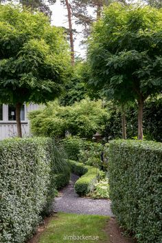 Pias och Lindas trädgård — Almbacken Trädgårdsdesign Little Lime Hydrangea, Hydrangea Paniculata, Hedges, Garden Inspiration, Stepping Stones, Garden Design, Arch, Sidewalk, Outdoor Decor