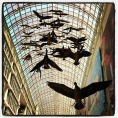 Shopping Eaton Centre, Great Places, Toronto, Shopping