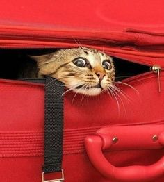 PetsLady's Pick: Funny Vacation Cat Of The Day...see more at PetsLady.com -The FUN site for Animal Lovers