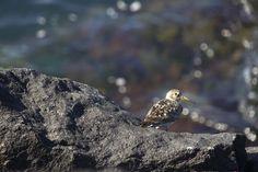 Photos of birds taken by me