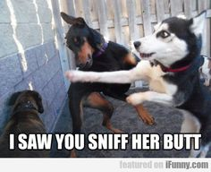 I Saw You Sniff