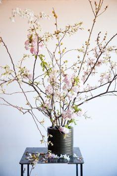 Sakura! It's Cherry Blossom Time | Sous Style