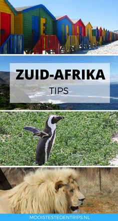 Rondreis Zuid-Afrika: bekijk alle tips. Welke bezienswaardigheden mag je niet missen en welke route is leuk om te nemen? Great Places, Places To See, Amazing Places, All About Africa, Cleft Lip, Knysna, Africa Travel, South Africa, The Good Place