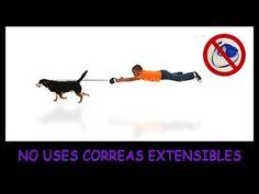 Mis Razones para NO usar Correas Extensibles para Perros
