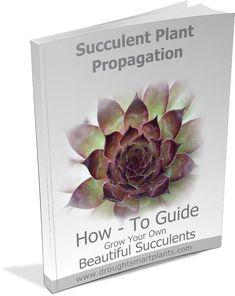 Succulent Plant Propagation E-Book - learn how to root succulents like a pro! Propagating Succulents, Succulent Gardening, Succulent Care, Planting Succulents, Container Gardening, Garden Plants, Plant Propagation, Succulent Ideas, Suculent Plants