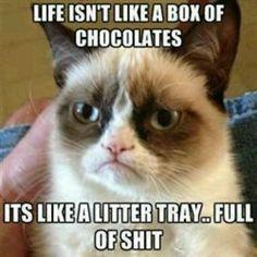 Omg best grumpy cat ever!!!!