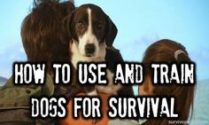 How To Use And Train Dogs For Survival