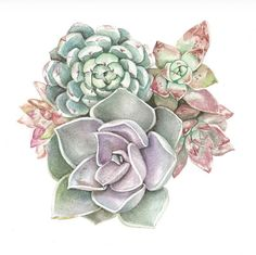 Items similar to Succulent Watercolor Print Set - Any TWO Succulent Art, Succulent Print / OR Botanical Prints, Modern Home Decor on Etsy Watercolor Succulents, Watercolor Flowers, Succulents Art, Succulents Painting, Watercolor Print, Watercolor Paintings, Watercolor Tattoo, Succulent Tattoo, Succulent Drawings