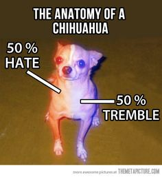 The anatomy of a Chihuahua. That's about right.