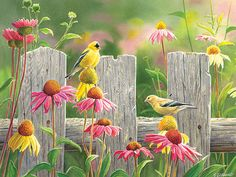 275 piece Easy Handling Pink and Gold bird puzzle Watercolor Paintings, Original Paintings, Bird Artwork, House Flags, Flag Decor, Gold Flowers, Puzzle Pieces, Pictures To Paint, Belle Photo