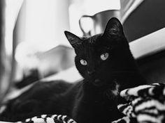 Как относитесь к чёрным кошкам?😼 ⠀ Не боитесь их? Особенно на улице?😸 ⠀ #kemerovo #novokuznetsk #barnaul #novosibirsk #cat #black #blackandwhite #pet #eyes #bokeh #adobe #500px #blackcat #moodygrams #catography Instagram Accounts, Cats, Animals, Gatos, Animales, Animaux, Kitty, Cat, Cats And Kittens