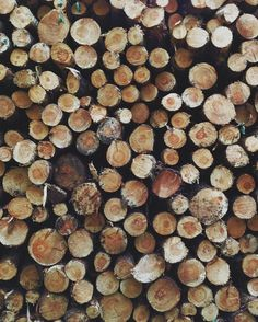 a fresh pile of wood - makes want to journey to upstate newyork for fresh air, rest, and relaxation