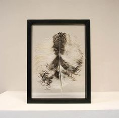 Zwart/witte struisvogelveer ingelijst in een zwart, houten lijst van 30 x 40 cm.