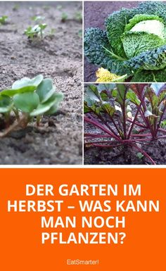 Der Garten im Herbst – Was kann man noch pflanzen? | eatsmarter.de