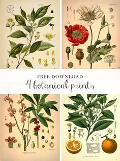 Free: Botanical prints! These would be nice framed in a black or gold frame even both...