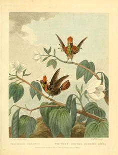 v. 1-2 (1792) - Musei Leveriani explicatio, anglica et latina / - Biodiversity Heritage Library